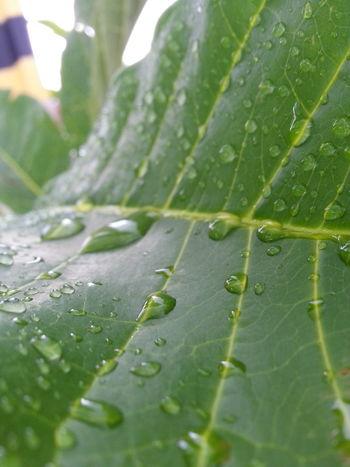 Folha Orvalho Water Rain Rainy Days Showcase: January