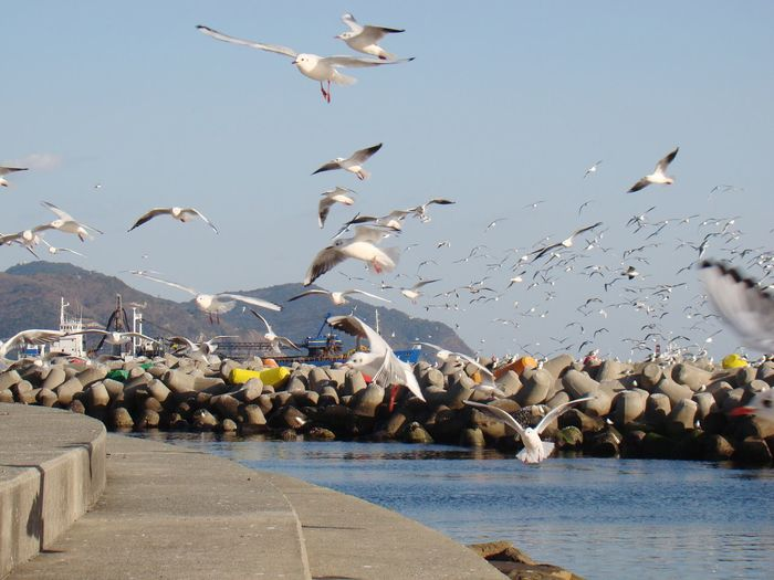 A flock of seagull Seagulls Sea Busan Songdo White Birds Flying