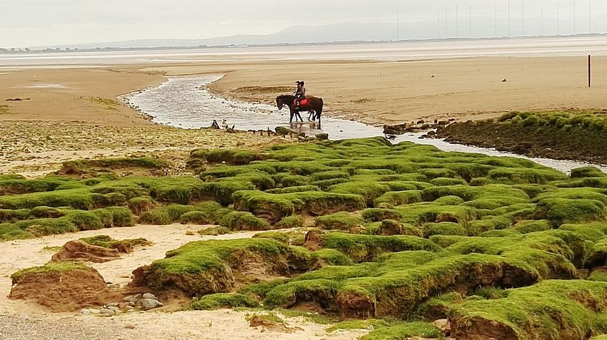 Horse rider on solway firth Scotland Beach Sand Water Beauty In Nature