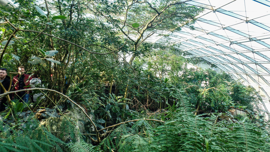 Plant Growth Nature Green Color Day Tree Greenhouse Outdoors Architecture Beauty In Nature Built Structure Glass - Material Freshness Leaf Incidental People Plant Part Agriculture Forest People Botany Plant Nursery
