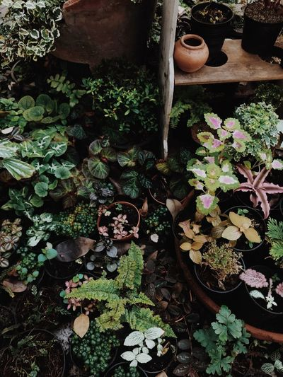 High angle view of potted plants in yard