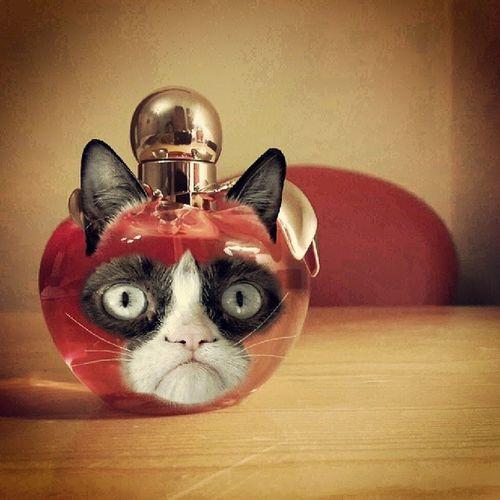 They said I could be anything, so I'm a perfume bottle , an apple, and I don't like it ...Angrycat Heyapple Heycat Perfume redappleninariccininamyperfumeinstasnapsinstamoodredfromtunisiatunis