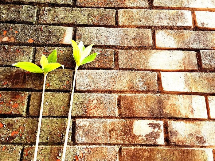 Growth Plant Leaf Nature Day Green Color No People Outdoors Fragility Close-up bricks firewall