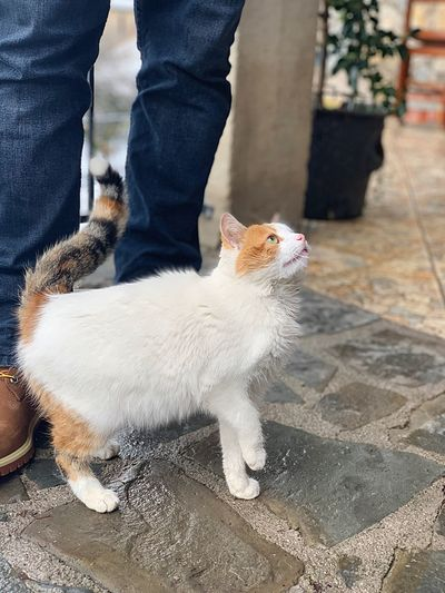 Catoftheday Snow Cat Cats Of EyeEm Cat Lovers Cats Cat Domestic Animals Pets Domestic One Person One Animal Mammal Vertebrate Low Section Pet Owner Cat Outdoors Day