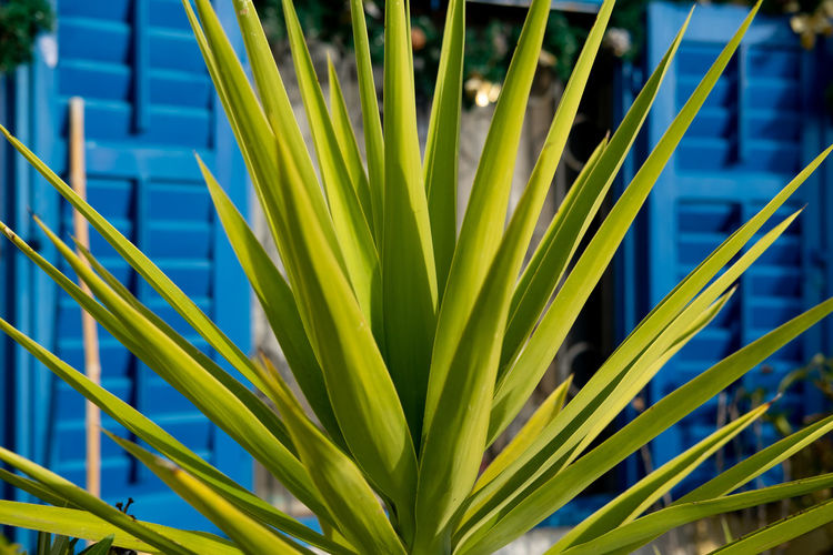 Palm leaf agains a blue window Growth Plant Green Color Leaf Plant Part No People Nature Beauty In Nature Day Close-up Sunlight Outdoors Focus On Foreground Palm Tree Blue Grass Botany Tree Pattern Palm Leaf Blade Of Grass Tranquility Sun Summer Seaside Town
