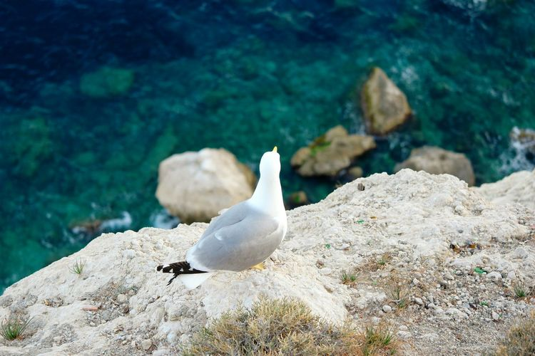 High Angle View Of Seagull On Rock Over Sea
