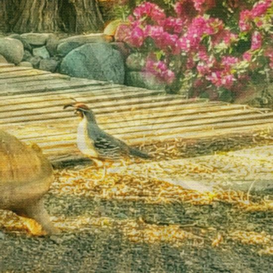 Hello World March 2016 Life In Motion Birdwatching Birds🐦⛅ That's Me Arizona Living Spring Has Arrived Nature Photography Birds Of EyeEm  Arizonalandscape Editing Photos Sharing A Moment Quails Staroftheday Onthemove Birds Lover Beautiful Nature Mybackyard Relaxing