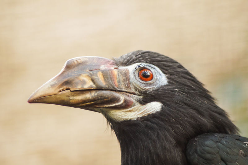 Portrait of a bird Bird One Animal Animal Themes Vertebrate Animal Close-up Focus On Foreground Animal Wildlife Animals In The Wild Beak Animal Body Part Animal Head  No People Looking Day Looking Away Bird Of Prey Nature Side View Zoology Animal Eye Profile View Animal Neck Eagle