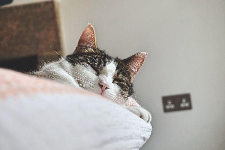 The sleeping lion.