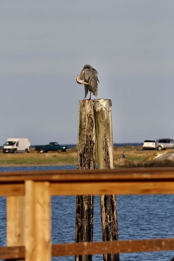 Bird perching on wooden post in lake against sky