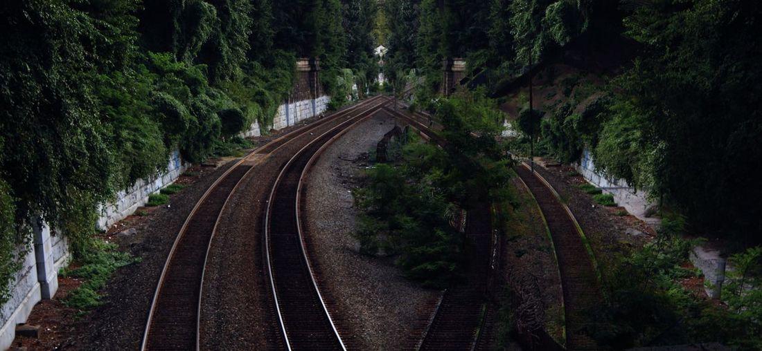 Railroad Track Transportation Rail Transportation The Way Forward No People Tree Outdoors Nature Day