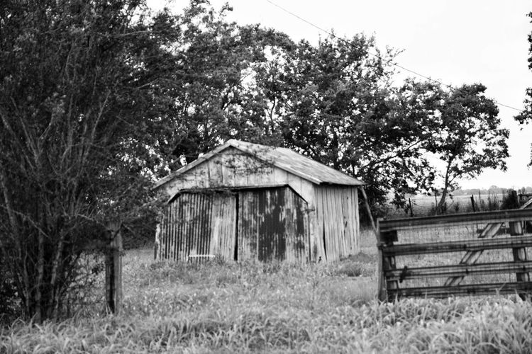 Tree Grass Built Structure Outdoors Architecture No People Wood - Material Day Growth Plant Nature Building Exterior Sky Rural Scene Barn Landscape South Louisiana Farmhouse Abandoned Buildings Deterioration Neglected Architecture Abandoned & Derelict Rustic Style Tin Roof Architecture