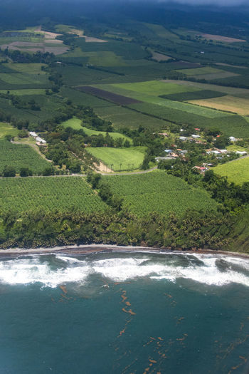 Martinique Aerial Shot Martinique Aerial View Agriculture Beauty In Nature By Plane Day Field Growth Island Land Landscape Landscapes Outdoors Plant Plantation Scenics - Nature Shore Tranquil Scene Tranquility Tree Tropical Climate Water