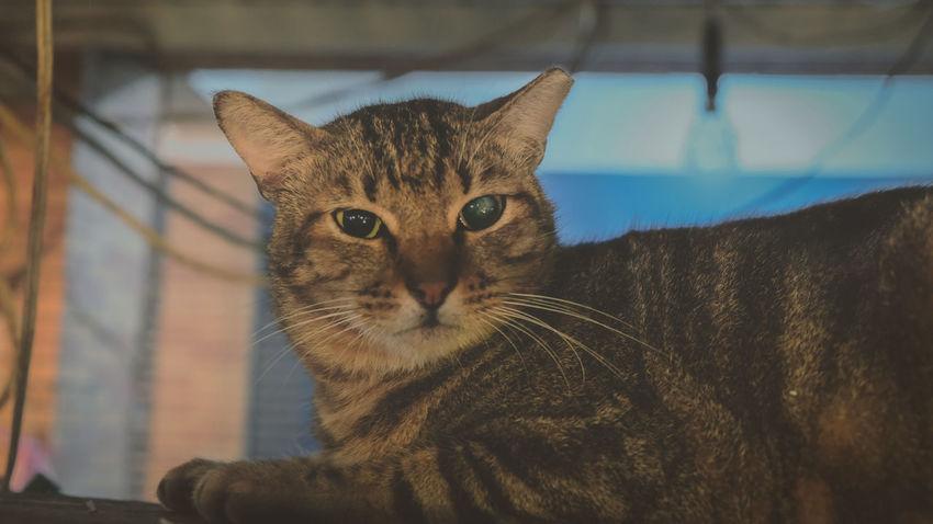 貓咪 貓星人 喵星人 猫の写真 Hkcats Katze Cat♡ Gato 貓 Meow 猫 Chat Cats Cat Photography Neko Meow🐱 Cats 🐱 Kot Cats Lovers  Gatto Cats Of EyeEm Cat Lovers Cat Stray Cat 野良猫