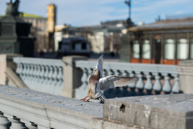 Animal Themes Animal Wildlife Animals In The Wild Architecture Bird Building Exterior Built Structure City Day Focus On Foreground Nature No People One Animal Outdoors Perching Spread Wings