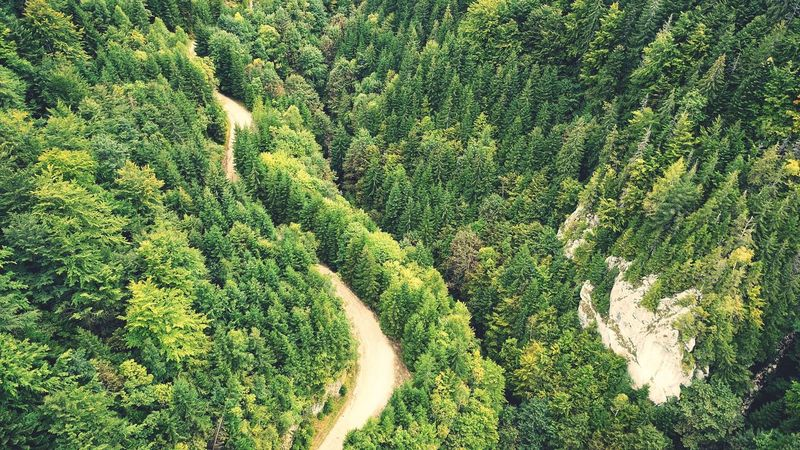Green green nature aerial view Aerial Shot Woods Woodstock Coniferous Tree Conifer  Green Green Nature Aerial View Aerial Photography High Angle View Full Frame Tree Evergreen Tree Pine Woodland Pine Tree Pinaceae Needle - Plant Part Pine Wood