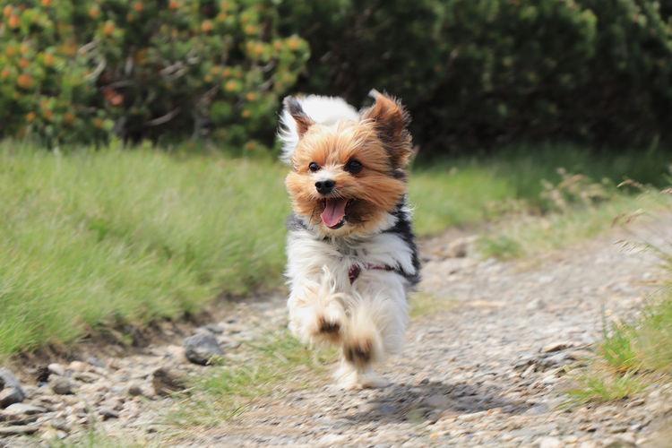 Dog running on road