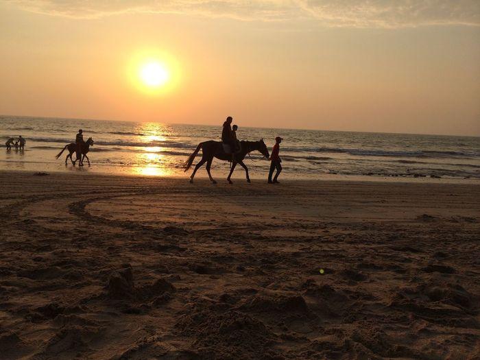 Tourists riding horses on beach