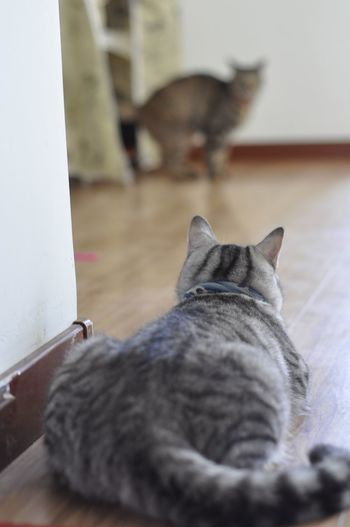 Animal Themes Cat Pets Animals Cats No People FUNNY ANIMALS Friends Enjoying Life Big Fat Cat