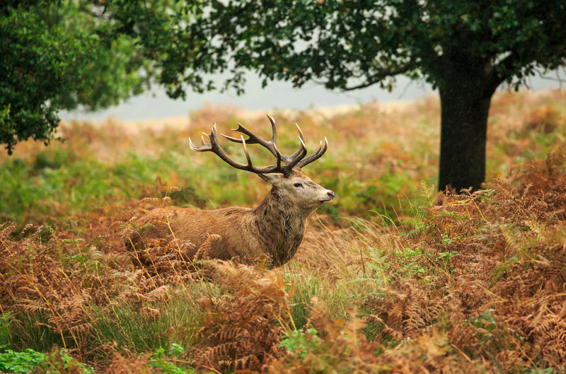 Red Deer Standing Amidst Plants In Forest