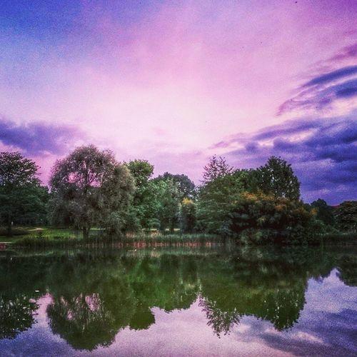 Grütt Lörrach Grillen Grüttsee Lake Sunset Cloudy Sky Park Nature Purple Trees