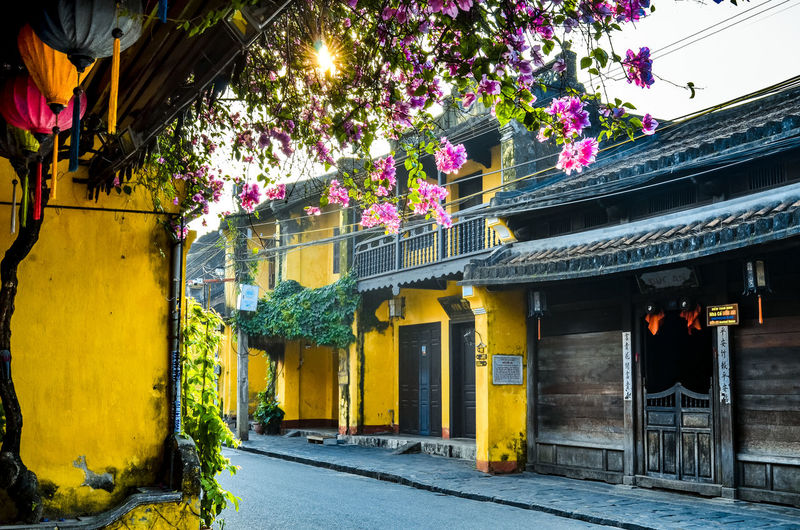 Architecture Building Building Exterior Built Structure City Day Entrance Flower Flowering Plant Freshness Growth House Nature No People Outdoors Plant Residential District Street Tree Yellow