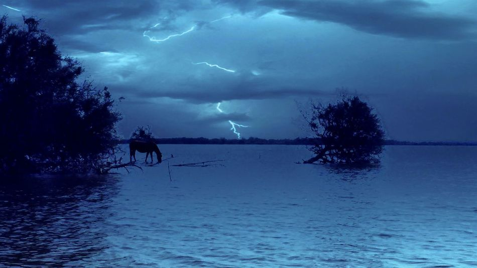 Rayo Raggio Ray Rays Ray Ray Agua Water Water Reflections Reflejoenelagua Caballo #caballos #cavallo #acqua