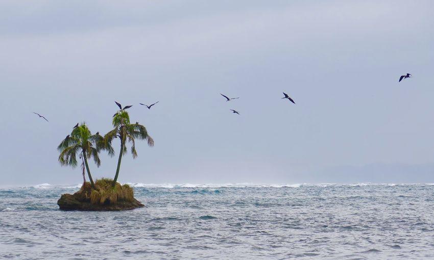 Beauty In Nature Bird Flying Horizon Over Water Island Palm Trees Sea Sky Water Wildlife