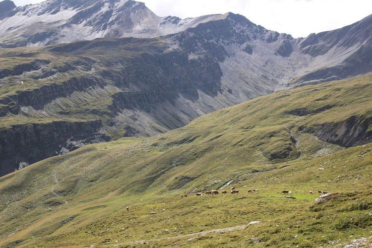 High angle view of sheep on mountains