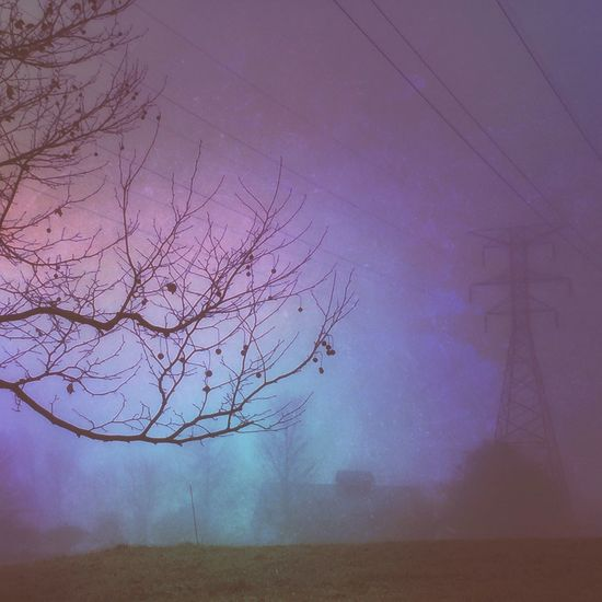 Foggy Morning Mood Landscape Landscape_Collection Rural Scenes High Power Lines Purple Tree