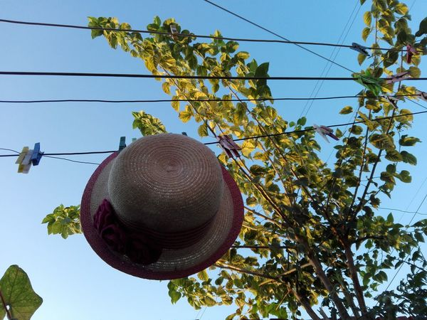 Drying Hat Hat Selected For Premium WOLFZUACHiV PREMiUM Wolfzuachiv Veronica Ionita WOLFZUACHiV Photography Veronica IONITA Photography Ionita Veronica Photography Veronica WOLFZUACHiV VERONiCA Photography Woman Hat Hat On Clothesline Clothespins Hat Hanging Hat Hanging On Wire Fashion Stories Hanging Cable Tree Low Angle View Power Line  Sky No People Clear Sky Outdoors Nature Day Summer Exploratorium Visual Creativity