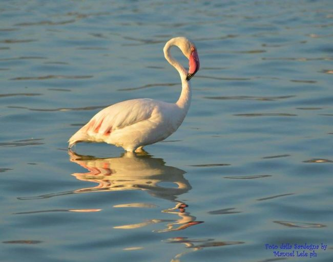 Bird Animals In The Wild Nature Animal Themes Water Surface Beauty In Nature Tranquil Scene