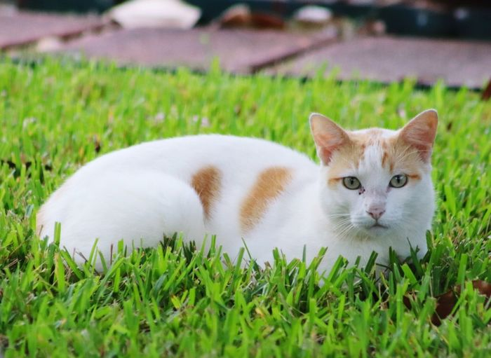Kitty 😻 EyeEm