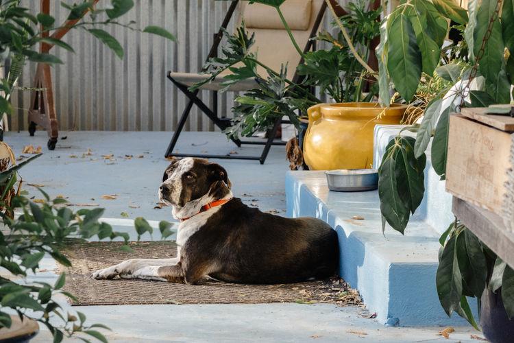 Dog Sitting By Plants