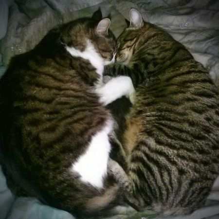 Night Night, Sleep Tight Snugglebuddy Snoozin Catsofeyem a:3541841] Two Is Better Than One