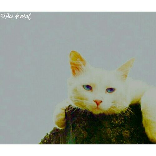 Images Image Colors Animals Photography Nature Pets Cat Photo Eyemcat