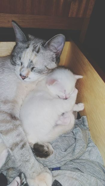 <3 Cats Family Motheranddaughter