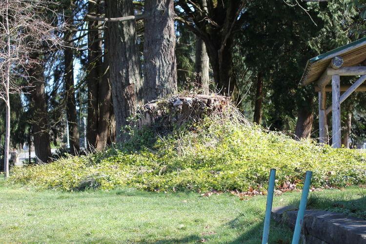 Grass Sunlight Trees Historic Moss Outdoors Park Tree Stump
