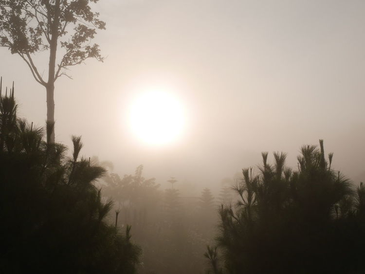Tree Nature Beauty In Nature Landscape Tranquility Tranquil Scene No People Outdoors Forest Scenics Sky Freshness Day The Purist (no Edit, No Filter) Country Life ที่เขาค้อเพชรบูรณ์ Thailand Fog Foggy Morning