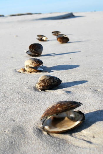 High Angle View Of Mussels On Sand At Beach