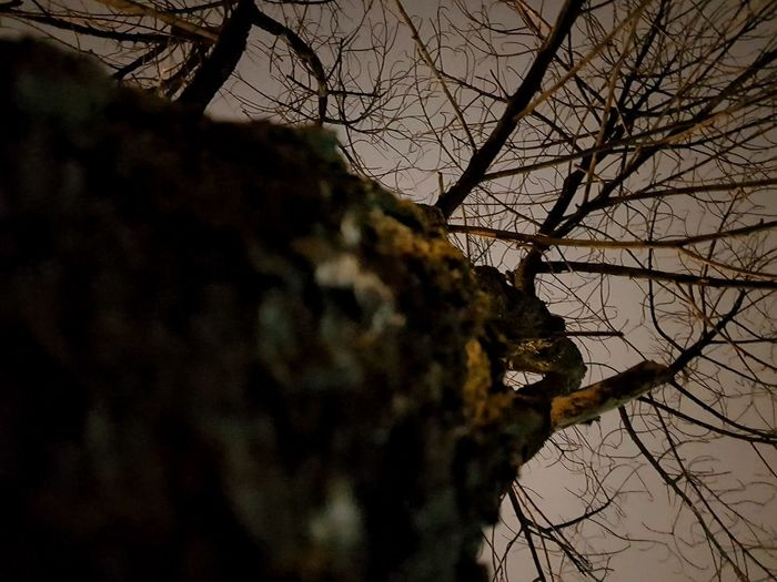 Branch Low Angle View Tree Nature Day No People Beauty In Nature Outdoors Sky Bare Tree Backgrounds Close-up Flower Fragility Low Angle View Tree Dead Tree Dead Weather Old Tree Night Phototgrapgy Night Tree Branch Dead Branch Dead Things