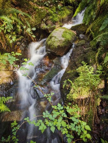Forest waterfall Hiking Adventures Scenics - Nature Mossy Stone Moss-covered Meditation Place Zen Moment  Water Plant Motion Beauty In Nature Nature No People Waterfall Long Exposure Blurred Motion High Angle View Outdoors Forest Flowing Water Growth Green Color