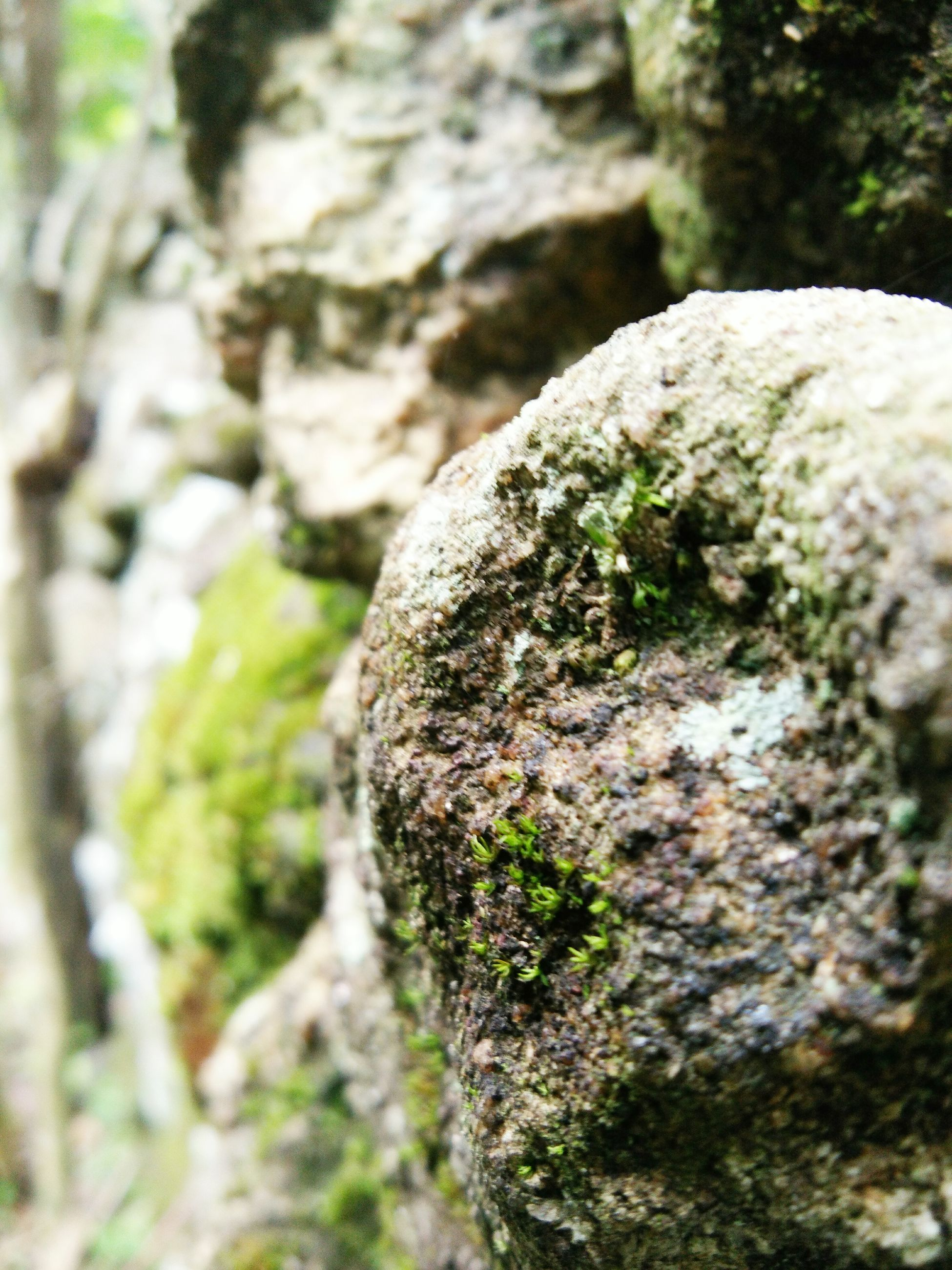 nature, tree trunk, tree, textured, close-up, day, rough, growth, outdoors, no people, beauty in nature