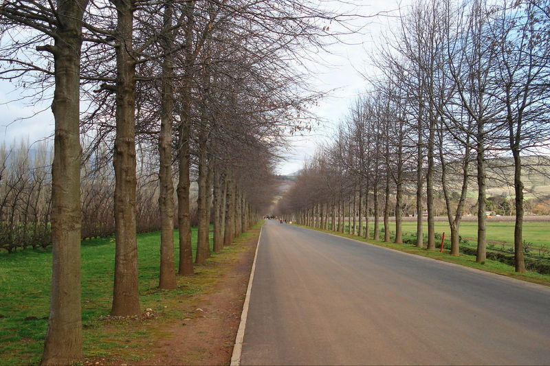Afternoon drive through the trees Road Road Of Trees Vanishing Perspective Bare Tree Beauty In Nature Disapearing Landscape Lane Line Of Trees Line Of Trees In Fog Nature No People Outdoors Road Scenics Sky The Way Forward Tranquil Scene Tranquility Tree vanishing point Winter Trees