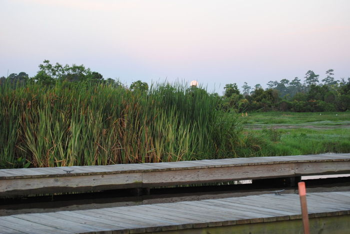 Full Moon at Sunrise Bayou Dock Full Moon Green Moonset Nature Outdoors Pier Swamp Tall Grasses Tranquility Water Wooden Piers