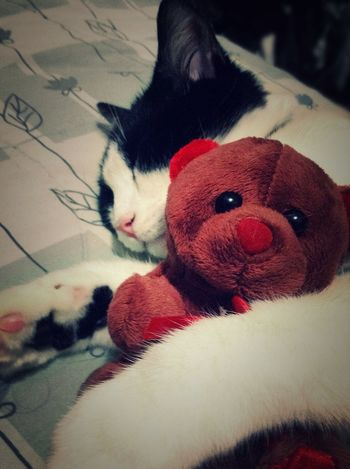 Cat EyeEm Best Shots Love Teddy Bear ?
