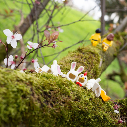 Bon weekend et joyeuses pâques Easter Eggs Paques Pâques 2018 Party Egg Happy Easter Chıcken Rabbit LEGO Legophotography Flower Flower Head Close-up Grass Plant