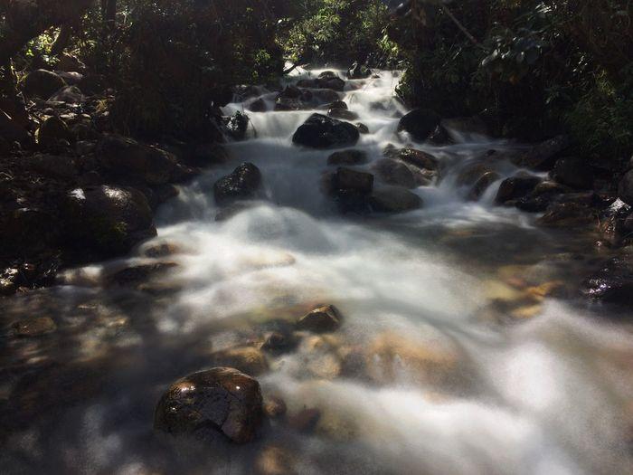 #beautifulnature #Flow #river #tree #water