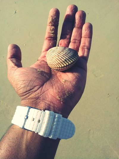 First Time Saw A Shell That Has Life..