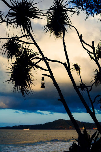 Silhouette palm tree by sea against sky